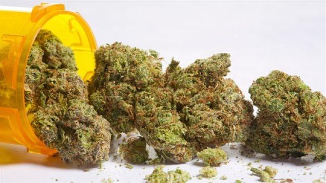 明年7月1日大麻将在加拿大合法化