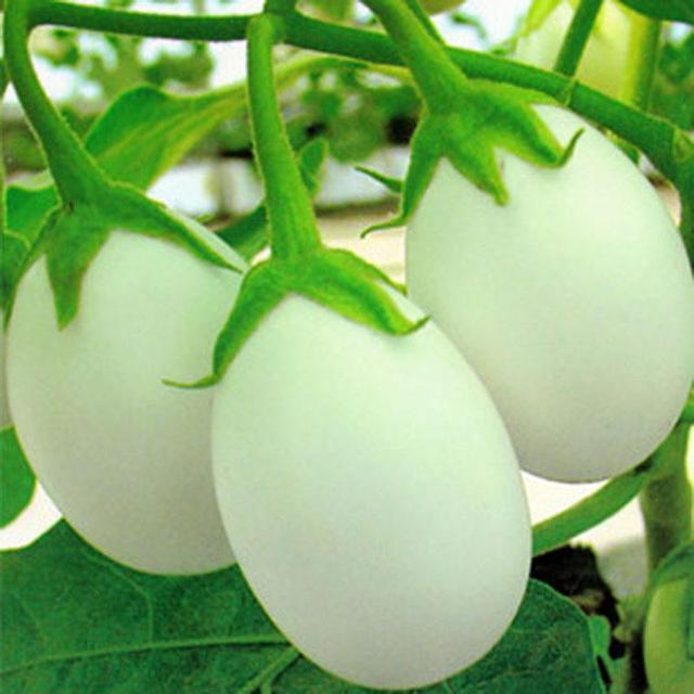 """阳台种""""鸡蛋"""",长得白净可爱,营养价值高,全家都爱吃!"""