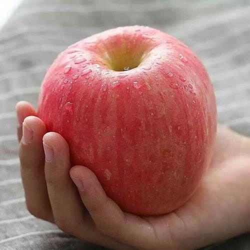 苹果什么时候吃才最好,这些硬知识你知道吗?