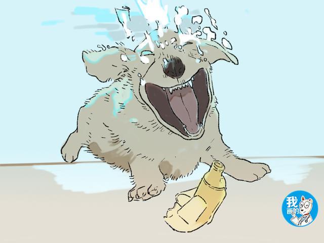狗狗练习潜水,女子在水底装了摄像头,画面传来后一时无语了