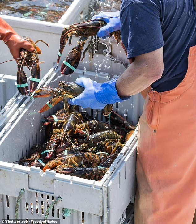 24276292-7963755-Lobster_is_being_sold_for_as_little_as_33_after_China_closed_its-a-26_1580796304282.jpg